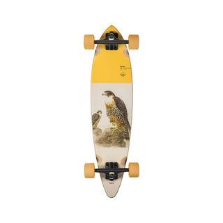 Pintail 34_Falcon